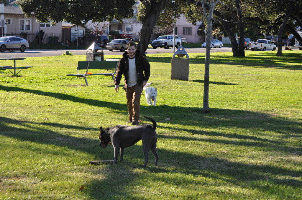 DeFremery Park Dogs